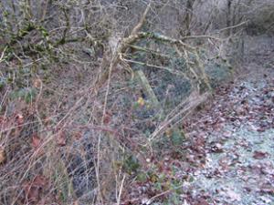 Coleorton Brook - Before