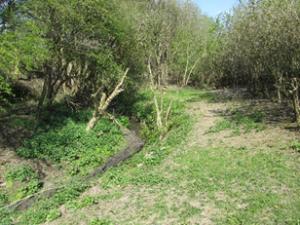 Coleorton Brook - After